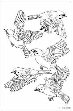"Photo from album ""Воробьи"" on Yandex. Bird Drawings, Animal Drawings, Bird Sketch, Human Figure Drawing, Feather Art, Watercolor Bird, Watercolor Landscape, Bird Illustration, Stuffed Animal Patterns"