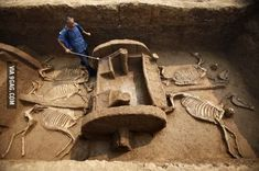 Chinese chariot with horse skeletons, 2500 years old.