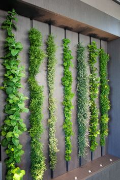 Take A Look At The LG Eco-City Garden That Was Displayed Dur.-Take A Look At The LG Eco-City Garden That Was Displayed During The 2018 Chelsea Flower Show This living wall in a kitchen can be used as an indoor herb garden - Garden Wall Designs, Vertical Garden Design, Herb Garden Design, Diy Garden, Small Garden Design, Herbs Garden, Green Garden, Flora Garden, Garden Ideas Diy