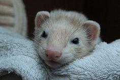 Fuzzy face   Flickr - Photo Sharing!