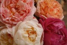 Image result for david austin roses bouquet