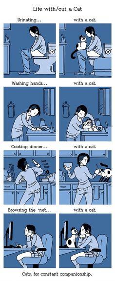 Cats humor gatos 51 new ideas Funny Cute, Funny Memes, Cat Memes, Super Funny, Hilarious Quotes, Funniest Memes, Funny Laugh, Funny Stuff, Crazy Cat Lady