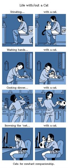 Life with a cat...And just as I was reading this my cat decides to eat the food out of my hand -.-
