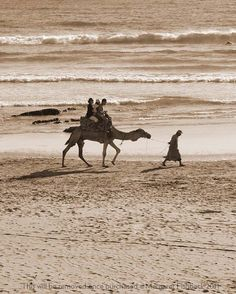 Camel Ride at Banana Point in Taghazout, Morocco
