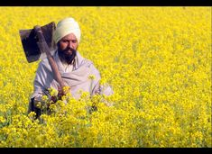 Sikh Farmer in the fields near Village of Muktsar...  - I love my Punjab...forever & always...