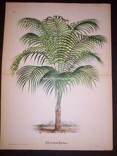 Palm Tree PL 169