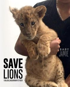 """@blackjaguarwhitetiger Apparel on Instagram: """"#SaveLions  #blackjaguarwhitetiger Rescued baby lioness #BabyJamieBJWT looking absolutely precious in the arms of one of her caretakers at the @blackjaguarwhitetiger foundation last week! #PapaBear is doing amazing things for over 170 #RescuedAnimals  #DonateToday at BlackJaguarWhiteTiger.org #SaveLions #NOTpets #nosonmascotas #ItsAllForLove #BJWT #boycottcircus"""""""