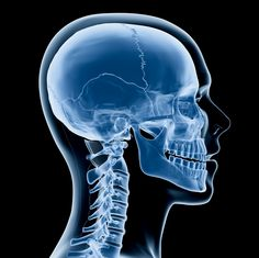 What does the shape of your skull say about you? In the 18th century, scientists and doctors believed the various contours to our skulls were clues to our souls. Back then,phrenology was a popular science that supposed the content of a person's character was related to the shape of his skull. Hard to believe with…