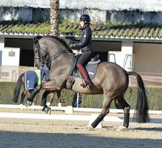 Jerez – Dressage blows hot and cold | The Horse Magazine – Australia's Leading Equestrian Magazine