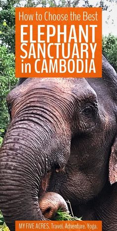 If you're planning a trip to an elephant sanctuary Cambodia can be a tough place to navigate. Which sanctuaries are legit? Which are just in it for the money? Use our guide to decide which is the best elephant sanctuary in Cambodia. Siem Reap, Places To Travel, Places To See, Travel Destinations, Travel Tips, Travel Hacks, Travel Guides, Laos, Phnom Penh