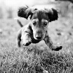 running puppy!!  Loving the energy!