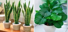 12 Lindas plantas que podem sobreviver até em ambientes escuros