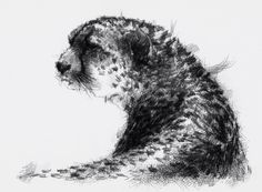 Artist Sean Briggs producing a sketch a day New cheetah  ##art#drawing#sketch ##chimphttp://etsy.me/1rARc0J