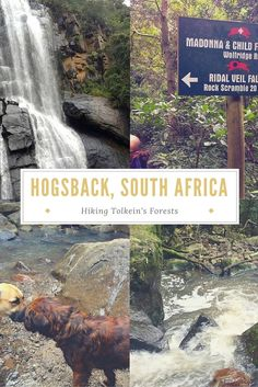 Hogsback, South Africa - Hiking Tolkein's Forests