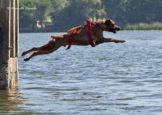 https://flic.kr/p/EkAEK8 | AmStaff Dog Rescue at work!