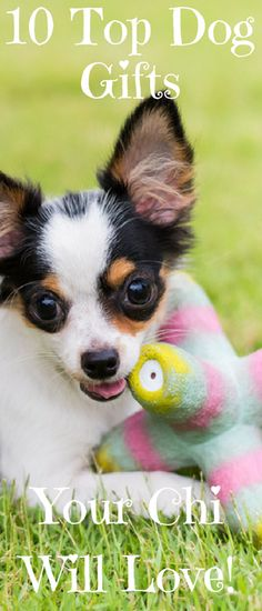 Looking for great gifts for your dog or friend's dog? Check our these top 10 gifts any dog or dog lover would love!
