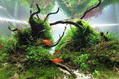 """""""Les gardiens des âmes perdues"""" par Jojo 2/2 #aquascaping #fishtank #aquarium"""