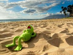 Kermit de kikker is op vakantie. 📌🐸✈☀ Kermit the frog is on holiday. Funny Quotes, Funny Memes, Hilarious, Die Muppets, Sapo Meme, Funny Frogs, Epic Photos, Kermit The Frog, Laughter