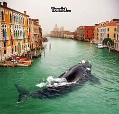 I am pretty sure this is 'shopped, but as Venice is sinking, something like this is not out of the realm of possibility.