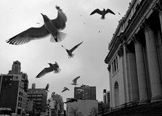 © Ruslan Pelykh
