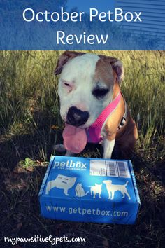 October PetBox Review + giveaway too! Dogs and cats welcome to enter.