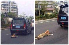 Prosecute Mr Zheng Weiyang For Dragging A Dog Behind His Car! | PetitionHub.org