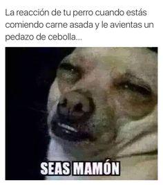 La reacción de tú perro