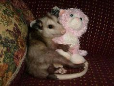 This little guy just loves his little stuffed animal. It is his best friend.