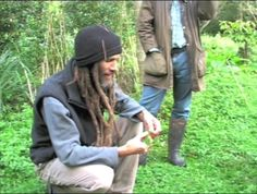 On Dock (Rumex) As Wild Edible Food Part 1 | Frank Cook on Vimeo
