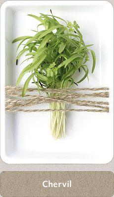 Herbs Micro Herbs, Spices And Herbs, Fresh Herbs, Homemade Seasonings, Herbal Medicine, Home Brewing, Herbalism, Cupboard, Plants