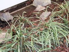 How to Make Over a Flower Bed : How-To : DIY Network