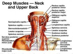 Common causes of neck pain are all related to a forward head posture.  Office work, hobbies, sleep, and the brain all have the potential to create muscle asymmetry leading to neck pain.