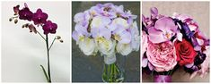 Orhidee phalenopsis mov si lila in buchete de mireasa Glass Vase, Floral Wreath, Wreaths, Home Decor, Floral Crown, Decoration Home, Door Wreaths, Room Decor, Deco Mesh Wreaths