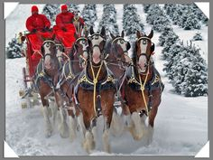 Christmas Clydesdale | Clydesdales Horses In Snow, Big Horses, Work Horses, Most Beautiful Horses, Pretty Horses, Budweiser Commercial, Animals And Pets, Cute Animals, Winter Horse