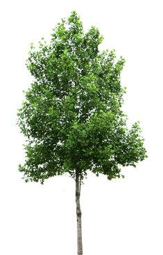 Free Texture - Trees - luGher Texture Library