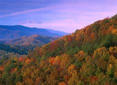Autumn trees cover the mountain side under a colorful twilight sky in this landscape wall art for the home or office. Appalachian Mountains ablaze with fall color Great Smoky Mountains National Park Wall Art by Tim Fitzharris from Great BIG Canvas. Mountain Sunset, Mountain Art, Autumn Scenery, Autumn Trees, Mountain Photography, Landscape Photography, Entryway Art, Foyer, Twilight Sky