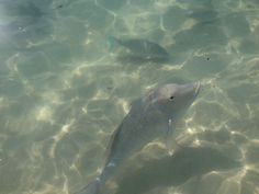 Fish feeding time coral bay