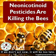 Are you buying plants that are killing bees?  Tell The Home Depot and Lowe's Home Improvement: Stop Selling Garden Plants Laden With Bee-Killing Neonicotinoids: http://orgcns.org/182qLWX Please Share and Repin!  #Neonicotinoids #SaveTheBees #USDA