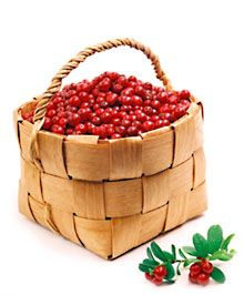 Pick wild berries in Finland! Harvest Time, Stuffed Hot Peppers, Finland, Woodland, Woods, Raspberry, Berries, Country, Nature