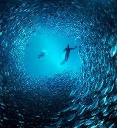 Dive Minnow Caves, Key Largo, Forida ... scuba diving, #adventure, #travel, #HyperActiveX