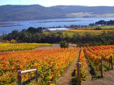 Derwent Estate Wines is a family owned and operated vineyard. The property has been in the current owner's family since 1913. The first vines were planted in 1992. The grape varieties in the...