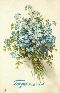 blue forget-me-nots in a bunch with string tied around bottom, leafy foliage included, stems right - TuckDB Postcards Vintage Pictures, Vintage Images, Pretty Pictures, Vintage Flowers, Vintage Floral, Blue Flowers, Vintage Cards, Vintage Postcards, Images Victoriennes