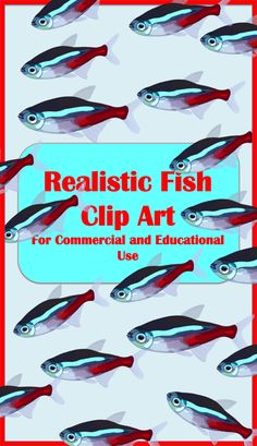 Affordable aquarium fish vector illustrations for commercial and educational use.  $