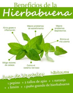 Hábitos Health Coaching | Beneficios de la Hierbabuena