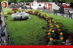 Periódico la verdad - En Jiquilpan, se engalana el jardín Colón para el próximo Festival de las Almas
