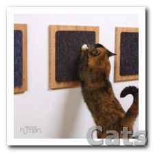 Make a DIY scratch board for your cat in minutes with just a.