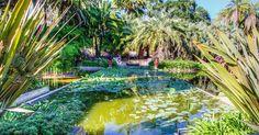 Lotusland em Santa Bárbara #viagem #california