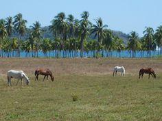 #CostaRica #Pferde #Palmen Foto: weltweiser-Team Costa Rica, Horses, Animals, Pictures, Travel Inspiration, Animales, Animaux, Horse, Animal