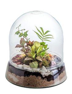 cuales plantas necesito hacer un mini jardin - Buscar con Google