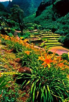 Limahuli Garden is a botanical garden and nature preserve on Kauai''s north shore. Missed it on our last trip due to hurricane Ana